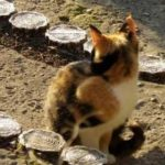 三毛猫の幽霊